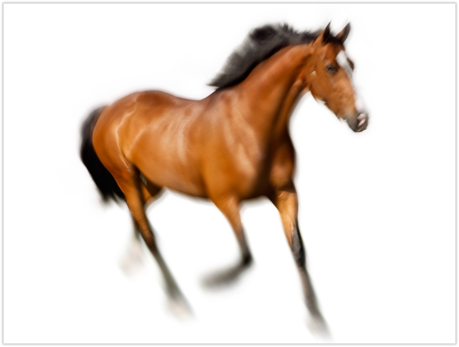 Frederico-Horse-1_044-as-Smart-Object-1_drop